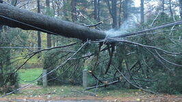 Electrical safety, power line safety